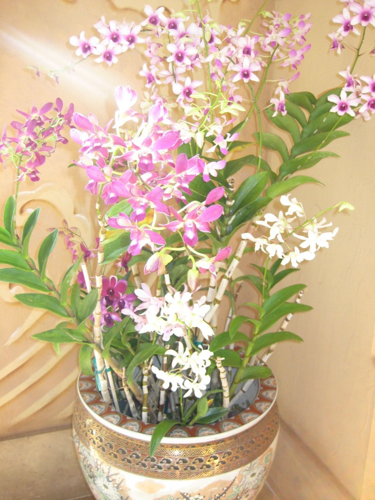 Pot of Orchids at 4 Seasons Resort, Lanai, HI